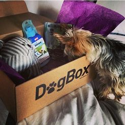 En låda fylld med roliga grejer för hunden