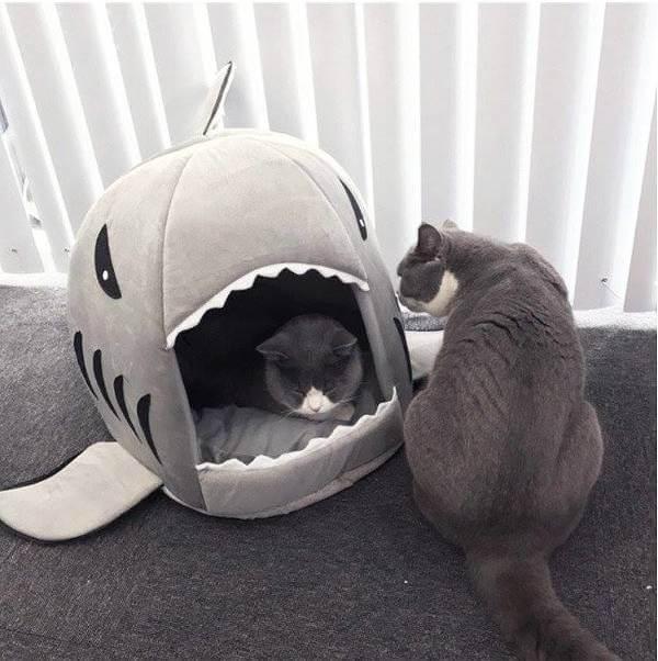 Katten blir glad av en hajkoja.
