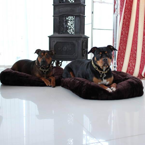 Varför inte köpa en ny säng åt hundarna? Passa på att slå in presenten i ett fiffigt paket.