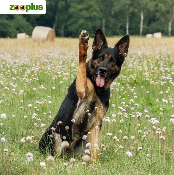 zooplus - experter på husdjur sedan 1999.