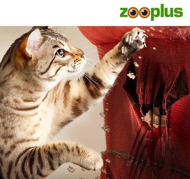 Produkter till katt, hund och massvis av andra älskvärda djur hos zooplus.