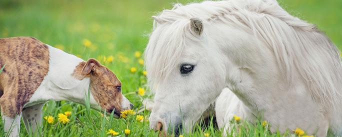 Hund och häst på en äng